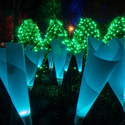 Winter Lights 1