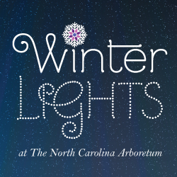 Winter Lights Feature Image